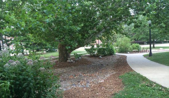 University of Illinois Red Oak Rain Garden