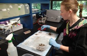 Crystal Hall sits at a work station, separating zebra mussels from quagga mussels