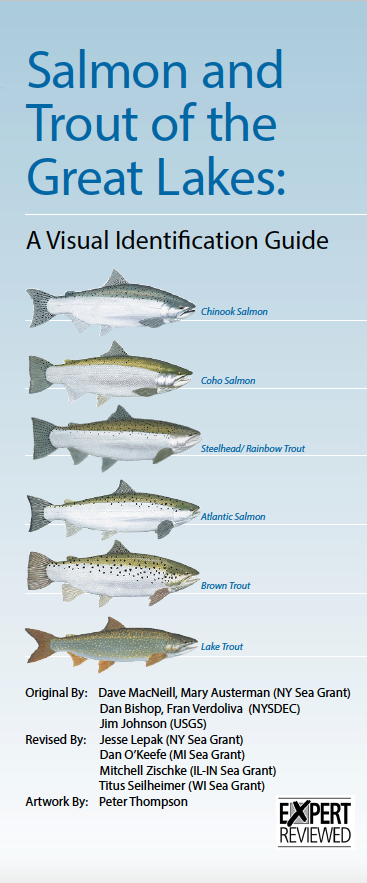 Salmon and Trout of the Great Lakes: A Visual Identification Guide Thumbnail
