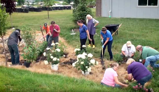 community members working together to plant flowers and shrubs in a rain garden
