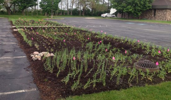 impervious surface of a parking lot with rainscaping section set up in the middle to help reduce stormwater runoff