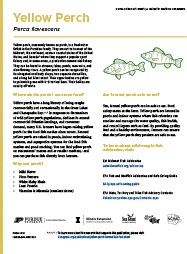 Yellow Perch Farmed Fish Fact Sheet Thumbnail