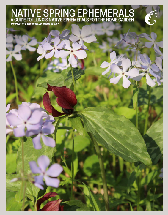 Native Spring Ephemerals: A Guide to Illinois Native Spring Ephemerals for the Home Garden Thumbnail