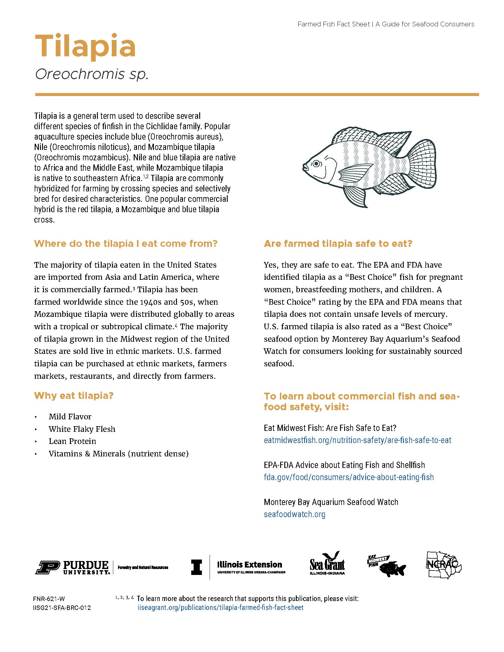 Tilapia Farmed Fish Fact Sheet Thumbnail