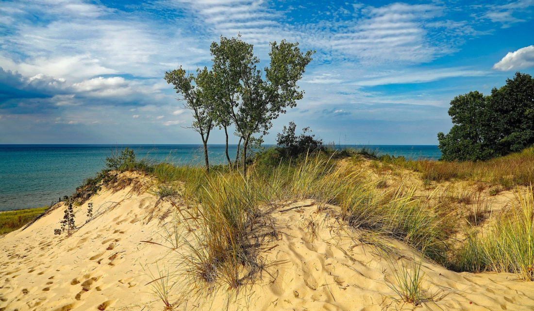 vegetation grows on sand dunes on the coast of Lake Michigan in Beverly Shores, Indiana